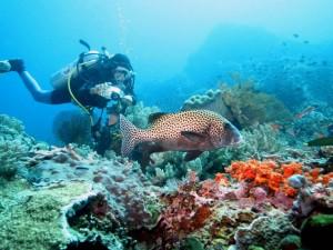 Diving in Lembongan, Bali