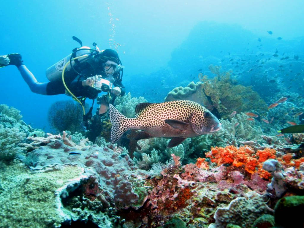 Bali, Indonesia Best Spot for Divers