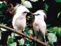 bali flora fauna