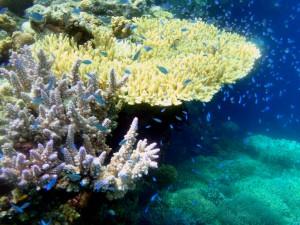 Diving in Menjangan, Bali