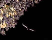 Goa Lawah bat cave, Bali